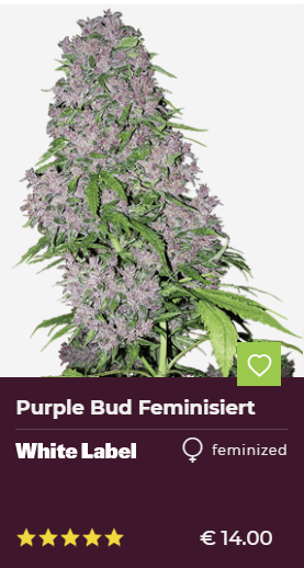Purple Bud Feminisierte Hanfsamen von White Label